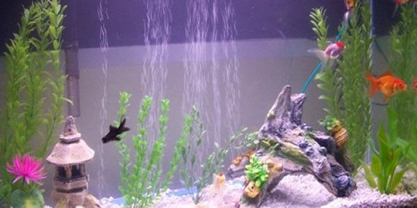 The place to be for professional aquarists and beginners alike for First fish tank
