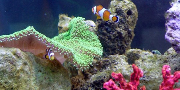 The place to be for professional aquarists and beginners alike for Saltwater fish tanks for beginners