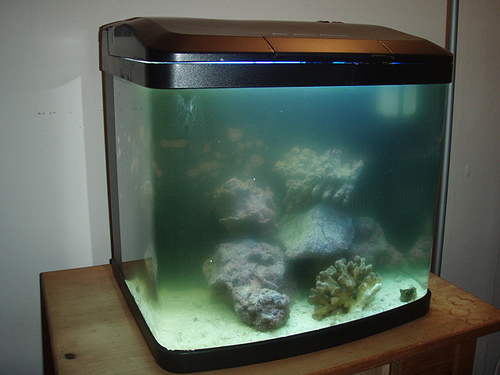 Do you want to know how to clean a very dirty fish tank for Clean fish tank