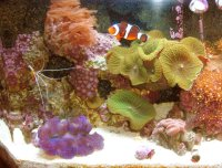 Clown Fish in a Tank with Sand