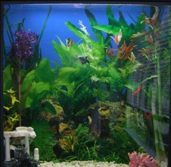 Top 10 things you should never do with your fish tank for What do you need for a fish tank